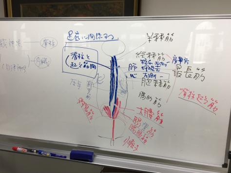 日本指圧協会 学術部 指圧研究会日本赤十字社にて。_a0112393_18331672.jpg