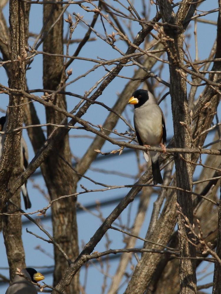 今日の鳥見(2017年2月16日)_f0235311_20271943.jpg