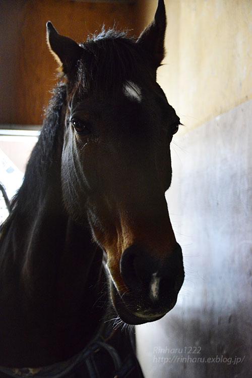 2017 如月の馬旅~2.12 ノーザンホースパーク☆フォゲッタブル【Thoroughbred】_f0250322_20575857.jpg