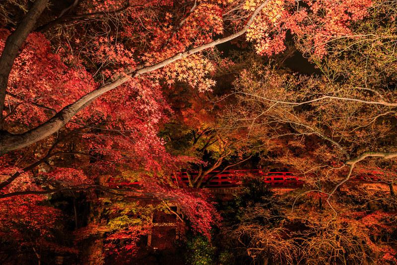 京都の紅葉2016 御土居の紅葉ライトアップ(北野天満宮)_f0155048_23564546.jpg
