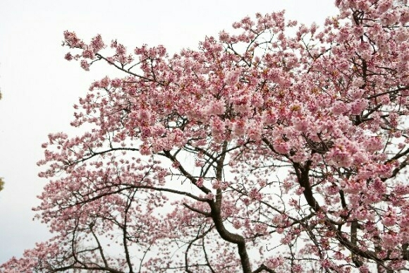 春〜_b0328361_22083002.jpg