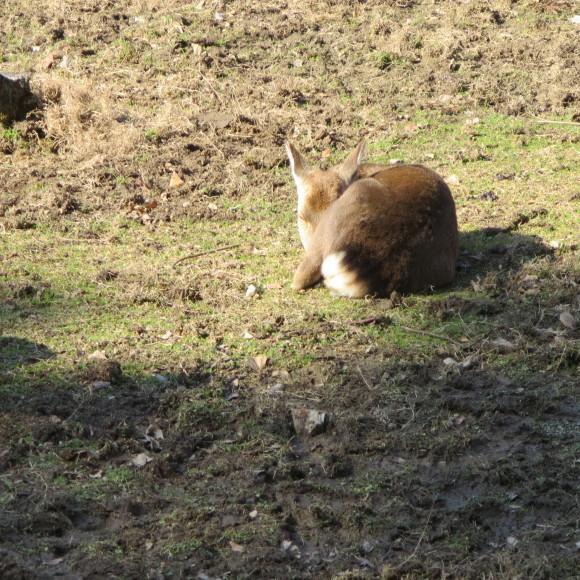 鹿たのない話_c0001670_21320012.jpg