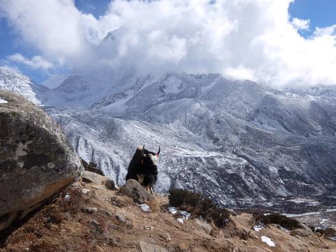 11日目: trekking day9 ディンポチェ(Nangkar Tshang)_a0207588_23405086.jpg