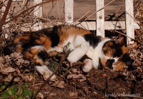 花壇の酔っ払い猫_b0253205_05301987.jpg