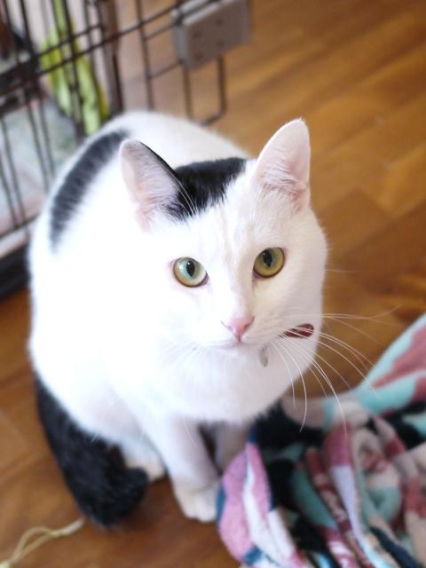 猫のお留守番 たらくん編。_a0143140_22175339.jpg