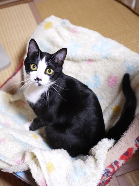 猫のお留守番 にこくん編。_a0143140_22204957.jpg