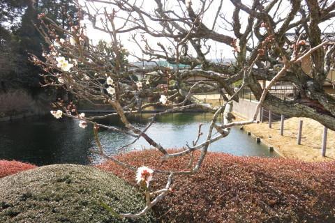 もうじき春です!_a0217348_11462616.jpg