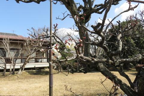 もうじき春です!_a0217348_11462708.jpg