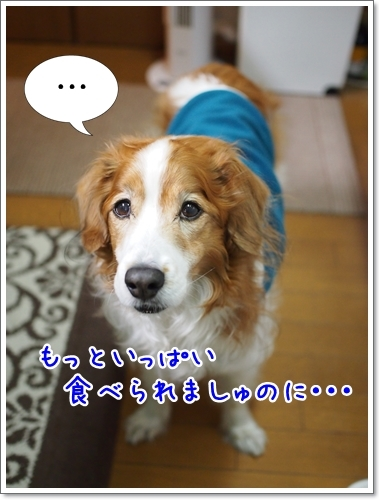 d0013149_00023111.jpg