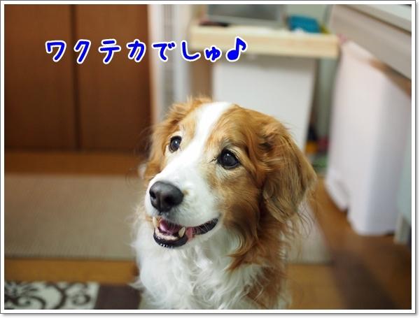 d0013149_00221586.jpg