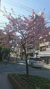 春まぢか?? ~港区立南山小学校~_e0088256_234191.jpg