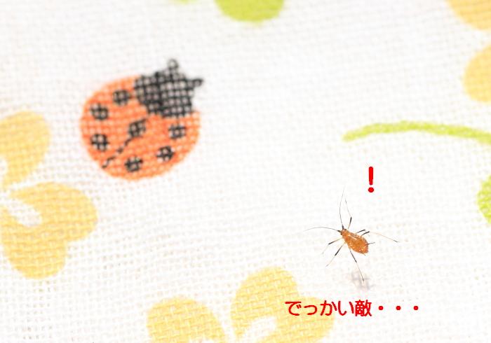 ■■ Sippo☆の春一番 ■■_c0195662_21424230.jpg