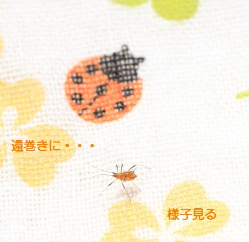 ■■ Sippo☆の春一番 ■■_c0195662_21425536.jpg