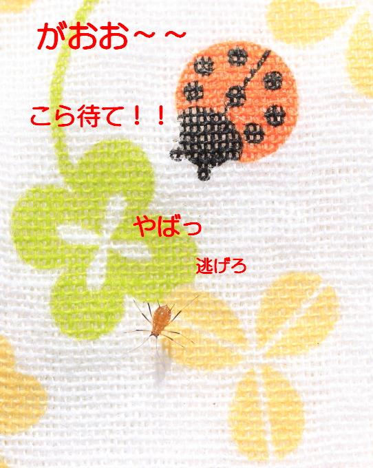 ■■ Sippo☆の春一番 ■■_c0195662_21432370.jpg
