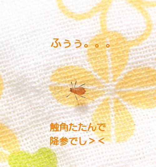 ■■ Sippo☆の春一番 ■■_c0195662_21433586.jpg