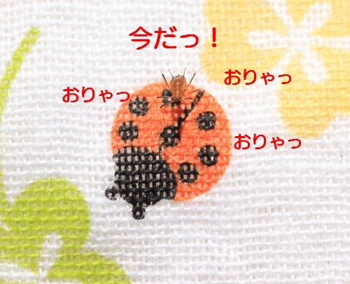 ■■ Sippo☆の春一番 ■■_c0195662_2143939.jpg