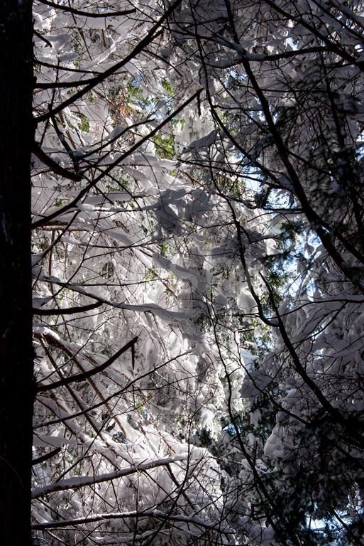 暑かった三峰山 2_c0350572_22112091.jpg
