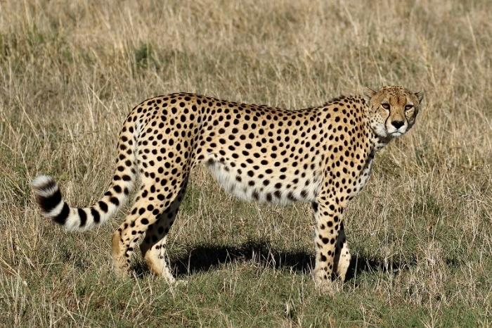 ライオン赤ちゃん、チーター、ライオン親子、そして豹(旅記録その9、2月17日のサファリ)_b0291402_00350000.jpg