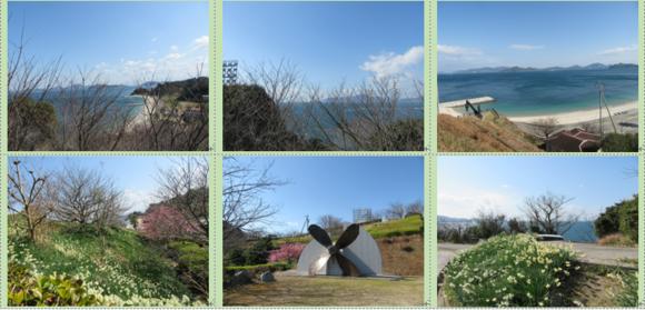 今治市大角海浜公園の水仙と河津桜と多くの種類の春の雲…2017/2/18_f0231709_18114295.png