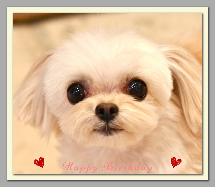 Happy Birthdayモコちゃん♡_d0060413_1736283.jpg