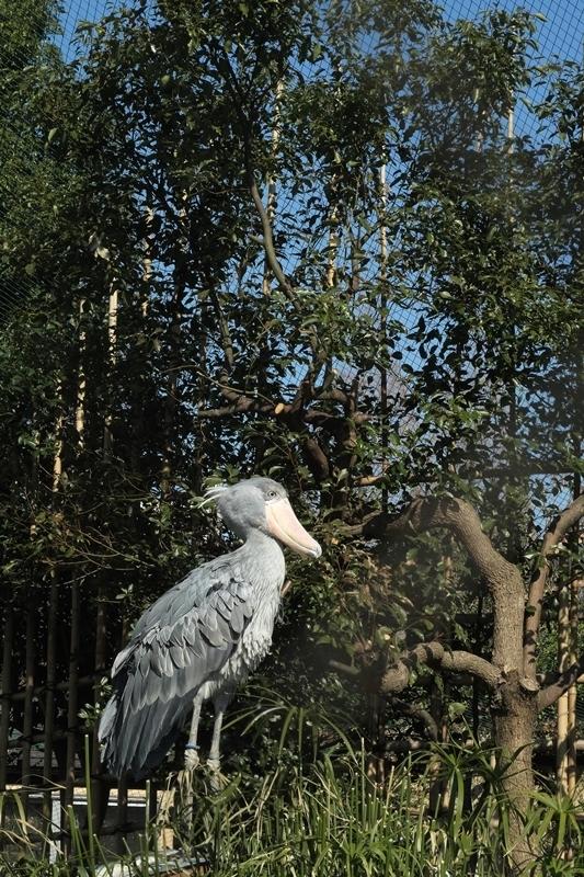 はじめての上野動物園_e0364223_21453011.jpg