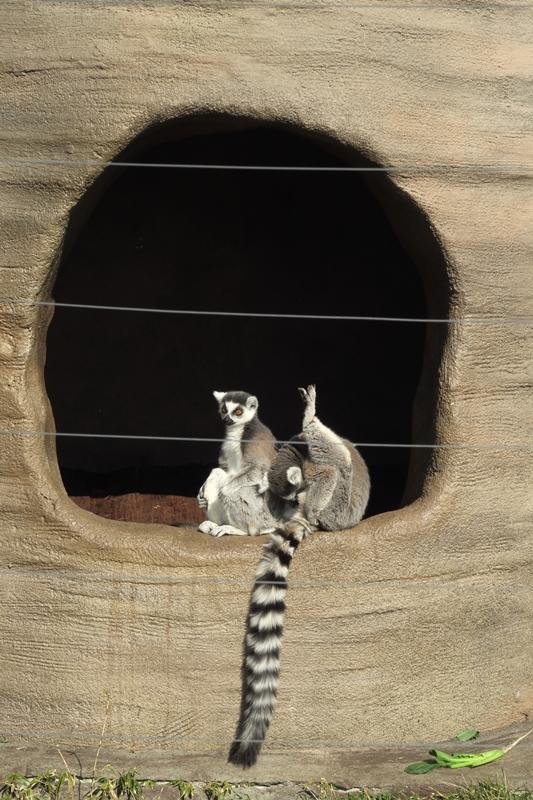 はじめての上野動物園_e0364223_21485952.jpg