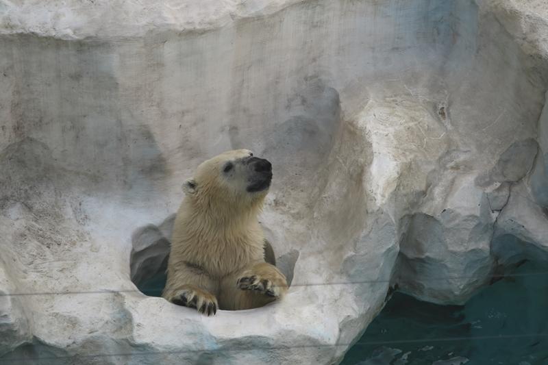 はじめての上野動物園_e0364223_21495565.jpg