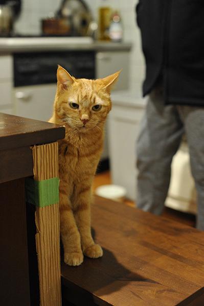 距離感&ペットに関する情報メディア「sippo(シッポ)」・学校猫「たま」いつまでも 忘れないよ 18年愛されて、校庭に墓標_b0162726_23262937.jpg