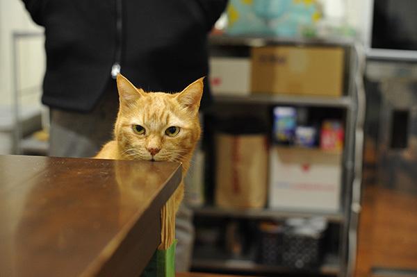 距離感&ペットに関する情報メディア「sippo(シッポ)」・学校猫「たま」いつまでも 忘れないよ 18年愛されて、校庭に墓標_b0162726_23262952.jpg