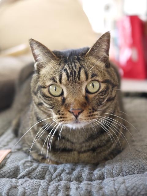 猫のお留守番 ララちゃん編。_a0143140_22415285.jpg