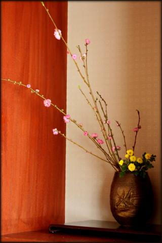 桃の花_f0053342_10474872.jpg