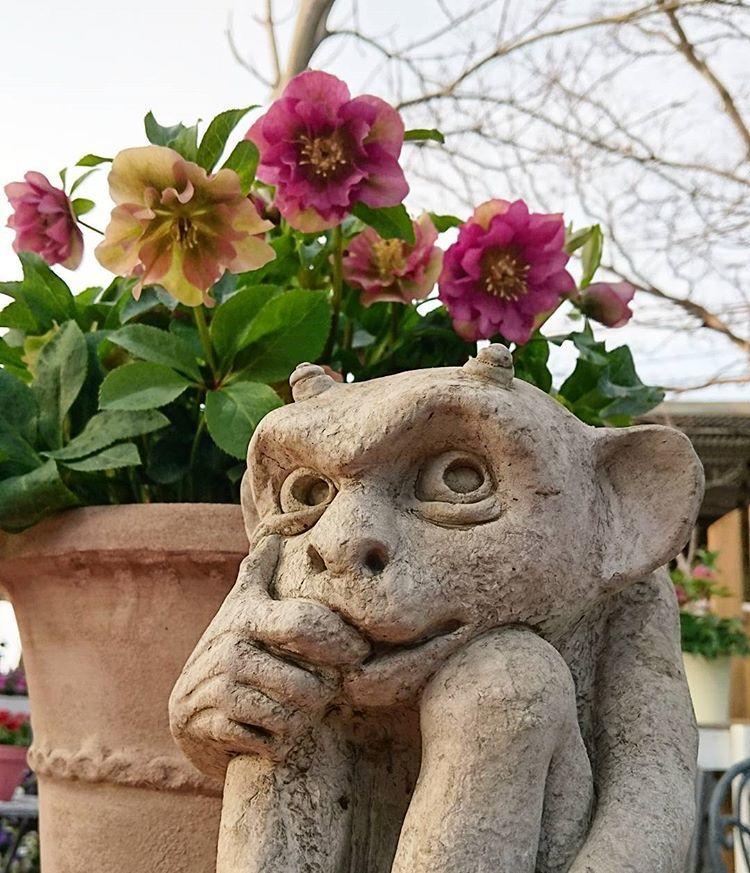 お花はもうすっかり春〜_b0137969_07252764.jpg