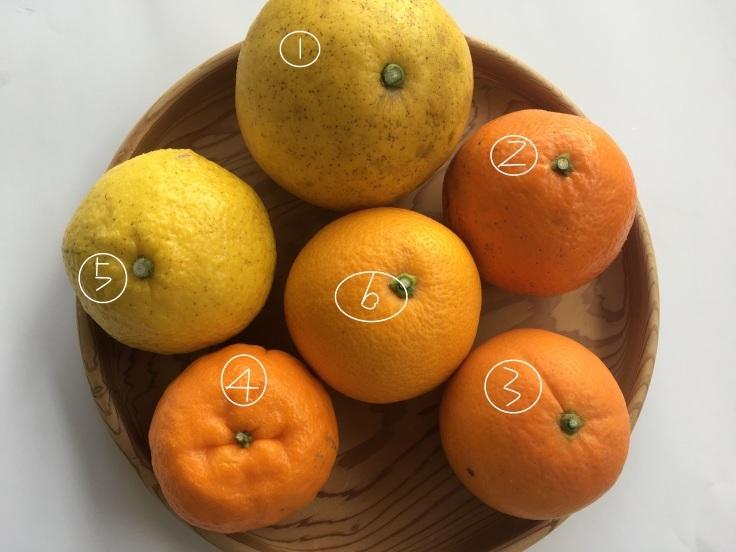 柑橘♪_e0356470_09522823.jpg