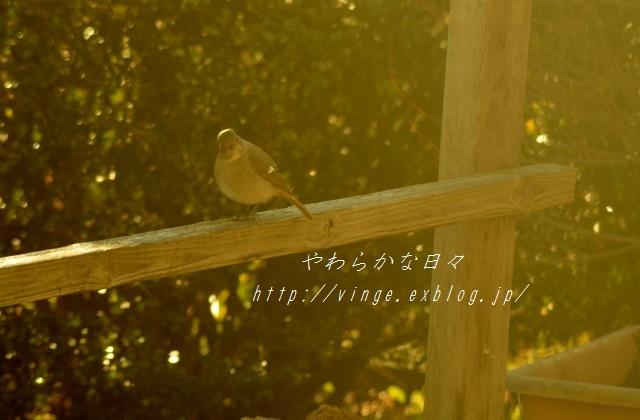 味噌作りへの道_a0158478_23221075.jpg