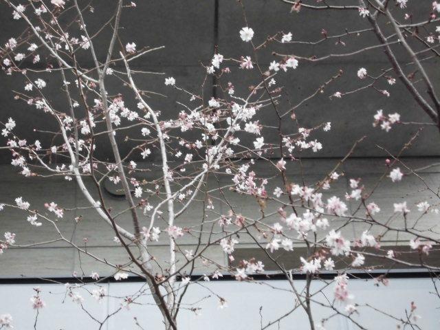 春がきた~_e0353178_15212413.jpg