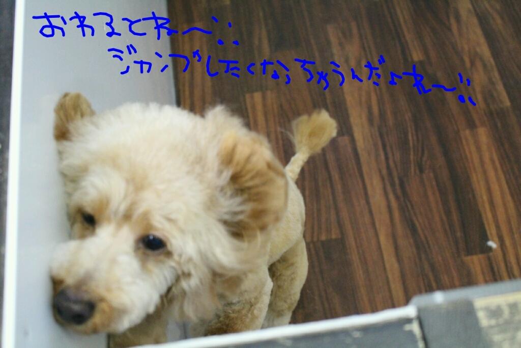 b0130018_20125714.jpg