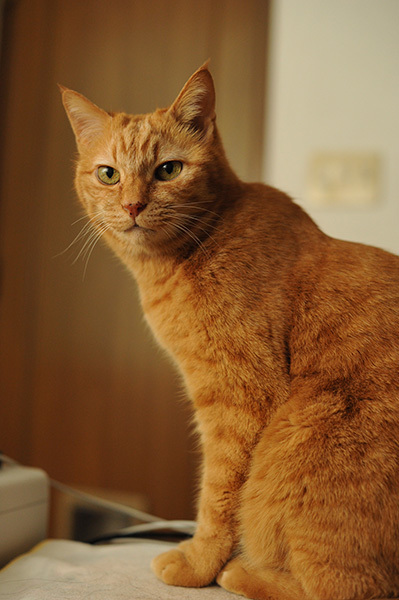 あまあまさん&大佛(おさらぎ)次郎(じろう)×ねこ写真展2017「猫は、生涯の伴侶」~大佛次郎は猫を愛した作家でした~ 2月22日~3月20日まで_b0162726_22254278.jpg