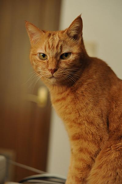 あまあまさん&大佛(おさらぎ)次郎(じろう)×ねこ写真展2017「猫は、生涯の伴侶」~大佛次郎は猫を愛した作家でした~ 2月22日~3月20日まで_b0162726_22254343.jpg