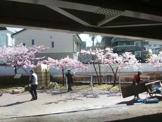 川津桜でお花見_d0057733_18112081.jpg