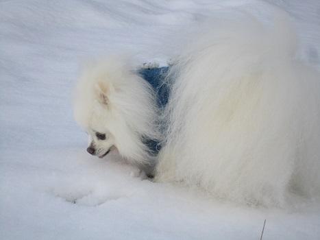 久しぶりの雪あそび_b0177436_22503463.jpg