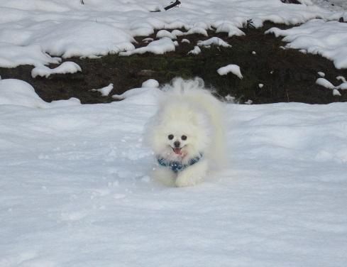 久しぶりの雪あそび_b0177436_22512052.jpg