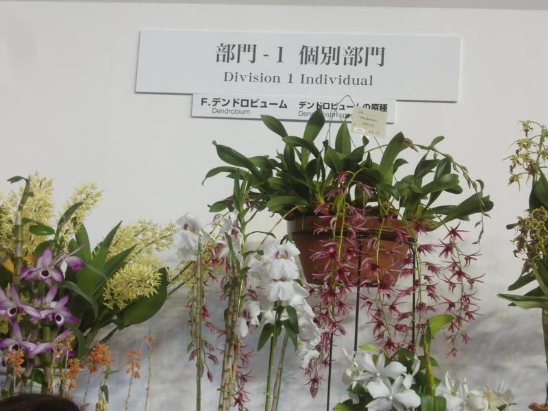 世界らん展 日本大賞 2017_f0329849_11150319.jpg