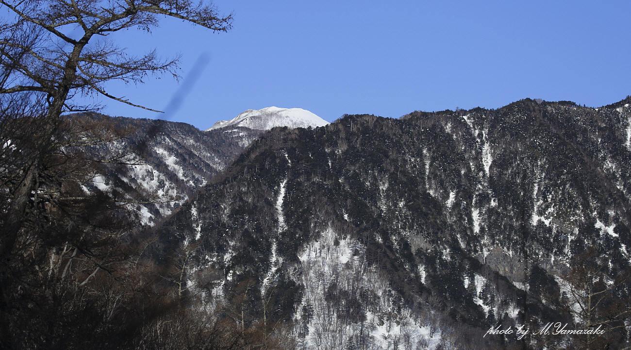 お山のエナガ_c0217255_15514562.jpg