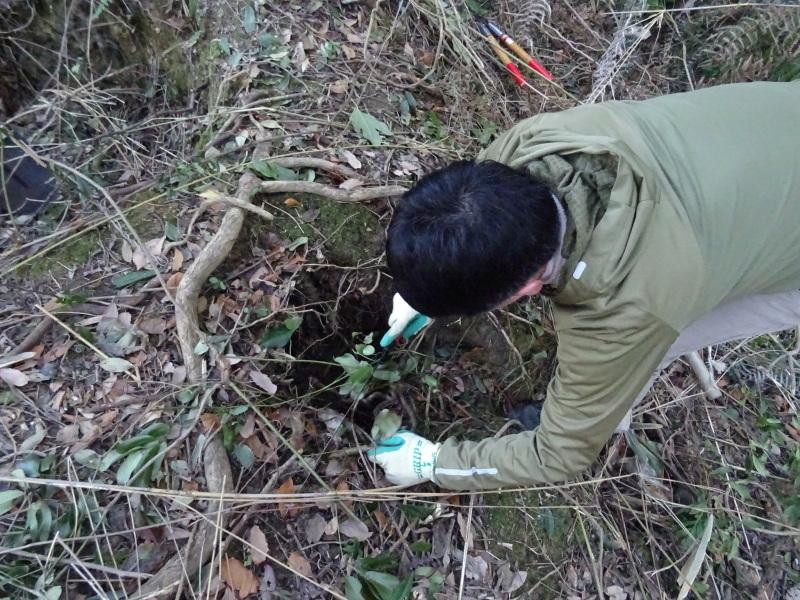 椿林の枯れ木伐採・・・うみべの森_c0108460_17502425.jpg