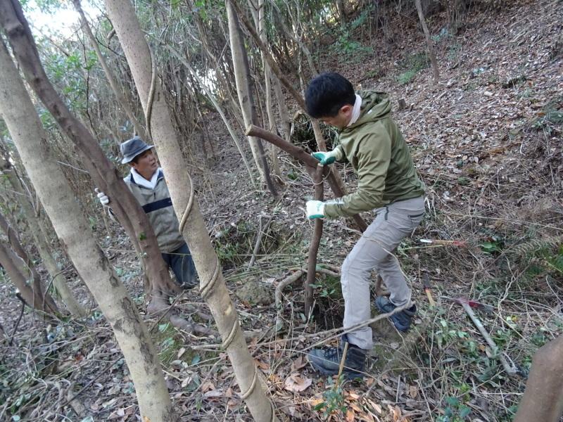 椿林の枯れ木伐採・・・うみべの森_c0108460_17505846.jpg
