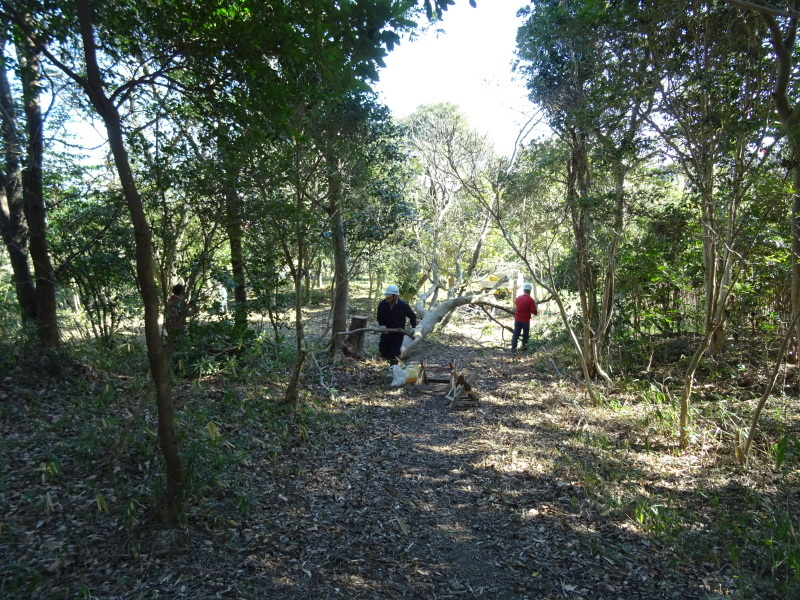 椿林の枯れ木伐採・・・うみべの森_c0108460_17515420.jpg