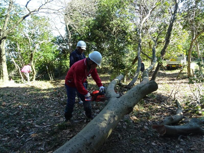 椿林の枯れ木伐採・・・うみべの森_c0108460_17553161.jpg