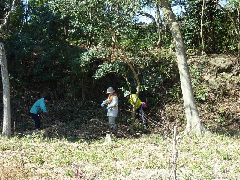 椿林の枯れ木伐採・・・うみべの森_c0108460_17564292.jpg