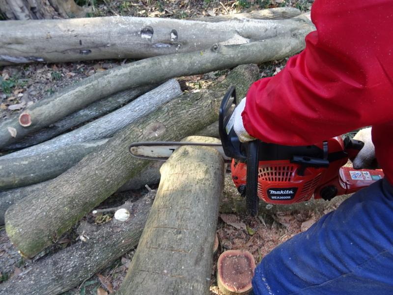 椿林の枯れ木伐採・・・うみべの森_c0108460_17570036.jpg