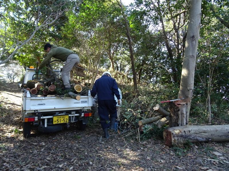 椿林の枯れ木伐採・・・うみべの森_c0108460_17574477.jpg